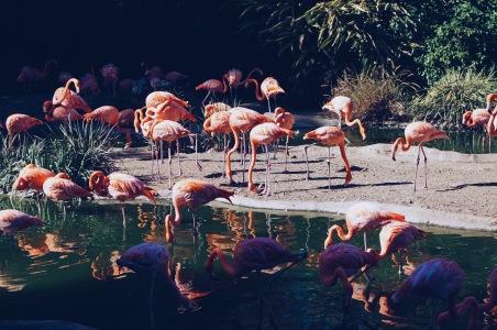 No flamingo picture no zoo